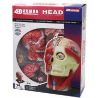 Пазл 4D Master Объемная анатомическая модель Голова человека Фото